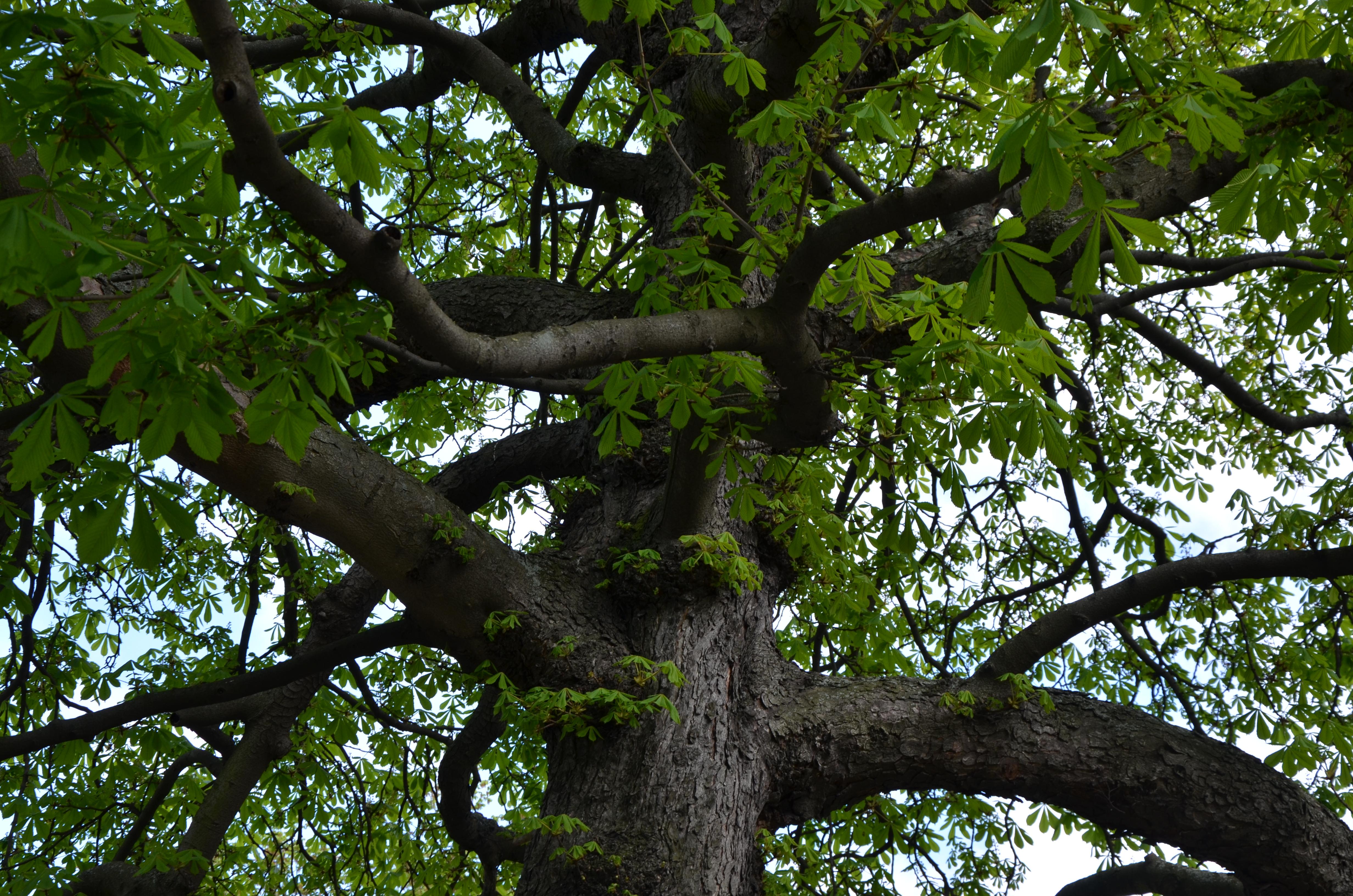 Erfreut Mach Deinen Eigenen Drahtbaum Fotos - Die Besten ...