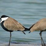 zwei Vögel stehen Rücken an Rücken