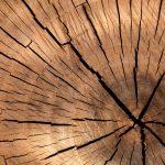 Baumstamm Querschnitt Risse Jahresringe